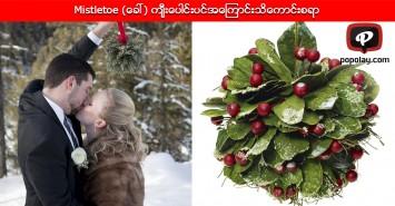 Mistletoe (ေခၚ) က်ီးေပါင္းပင္အေၾကာင္း သိေကာင္းစရာ