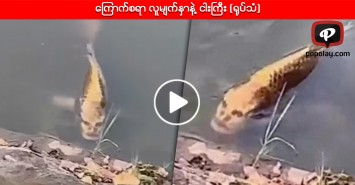 ကြောက်စရာ လူမျက်နှာနဲ့ ငါးကြီး (ရုပ်သံ)