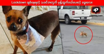 Lockdown ချခံနေရတဲ့ သခင်အတွက် မုန့်ထွက်ဝယ်ပေးတဲ့ ခွေးလေး
